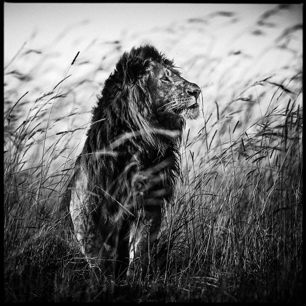 @ Laurent Baheux photographer